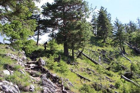 Wanderweg hoch zur Ostlerhütte