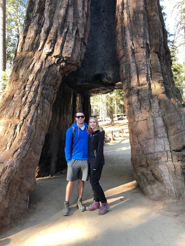 Mammutbäume im Yosemite National Park