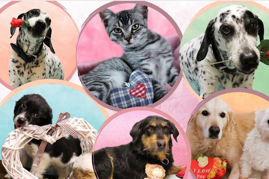 Der Tierschutzverein Marktoberdorf